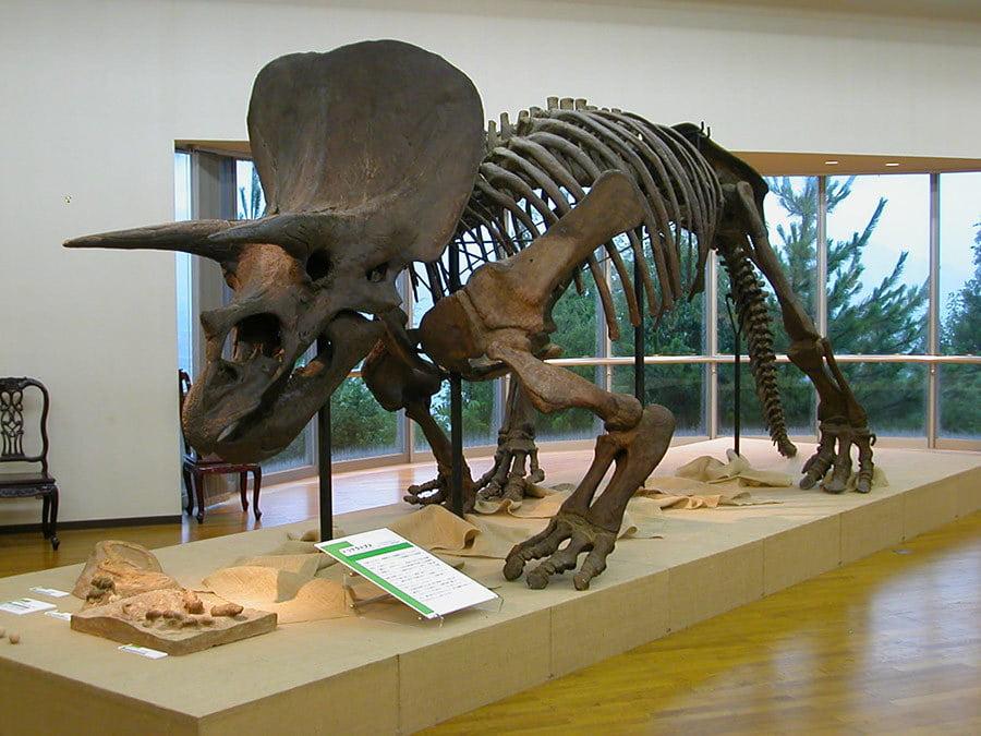 夏季特別展「恐竜ワールド」 ~生物進化の大冒険~