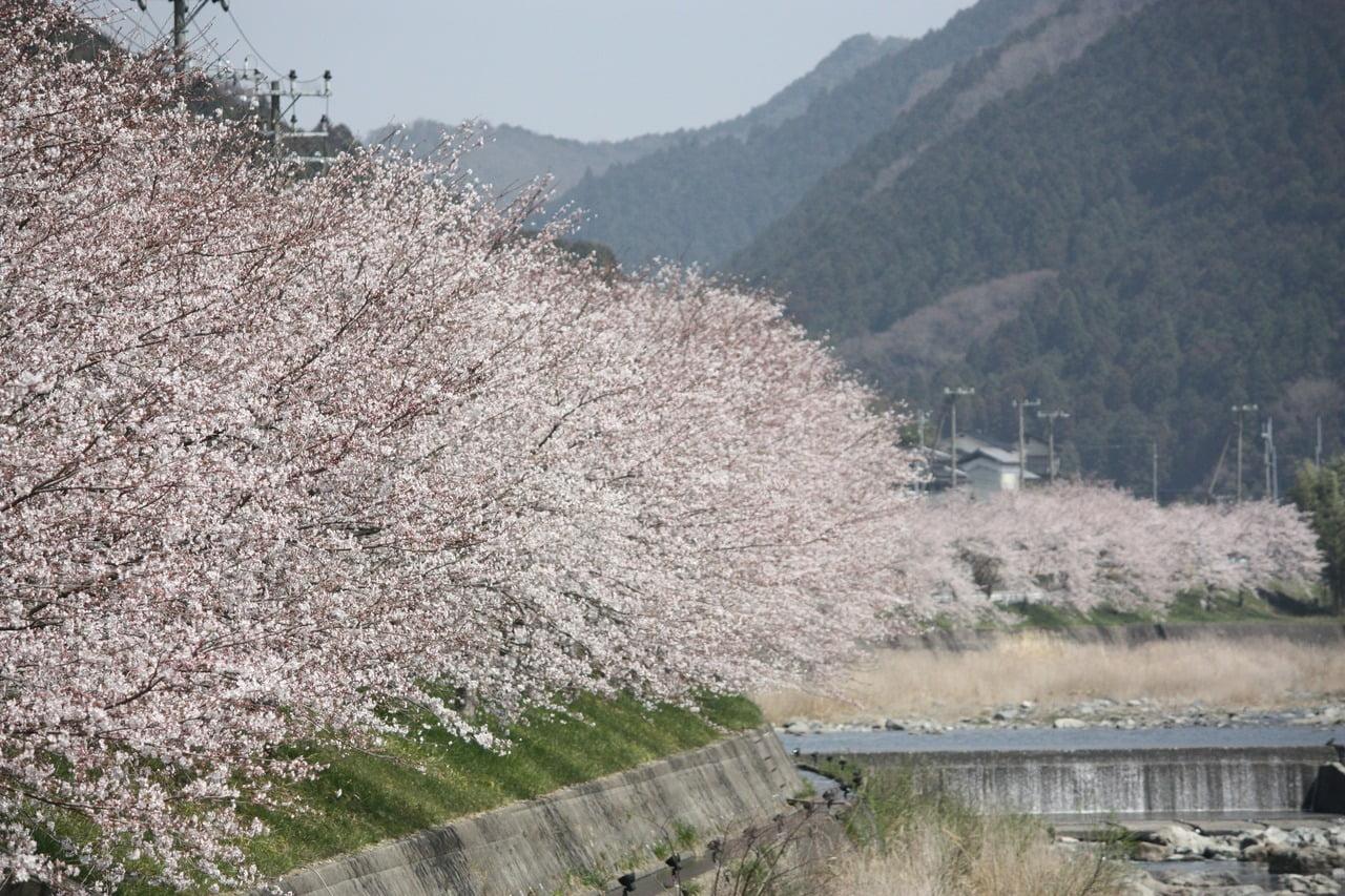 西深桜まつり