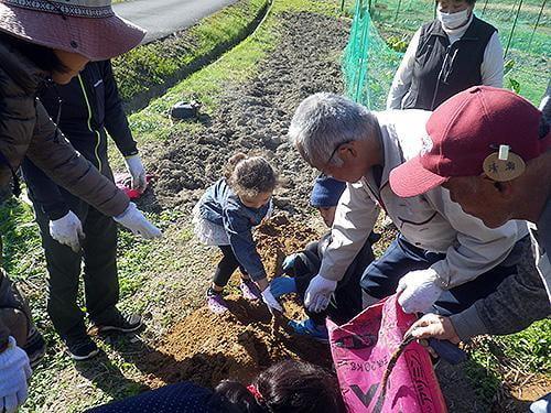 県立国見の森公園プログラム 自然薯の収穫とトロロ飯