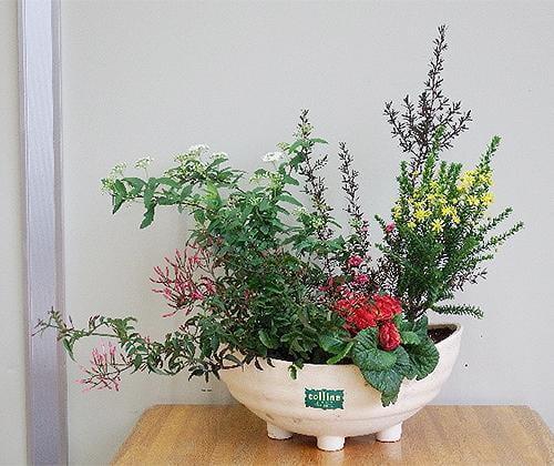 花と緑の教室~早春の草花の寄せ植えと管理法~