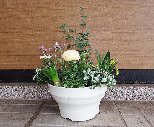 花と緑の教室~早咲き球根類を使った寄せ植えと管理法~