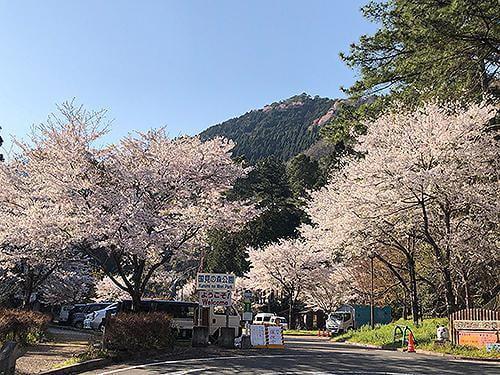 宍粟の花めぐり 県立国見の森公園の桜