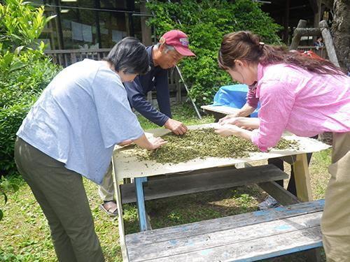 【中止】県立国見の森公園プログラム お茶摘みとお茶づくり
