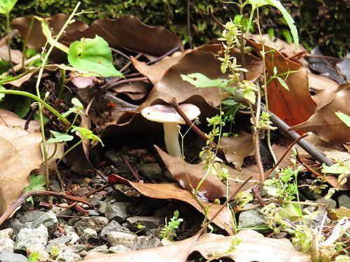 県立国見の森公園プログラム 夏の森のきのこ観察会