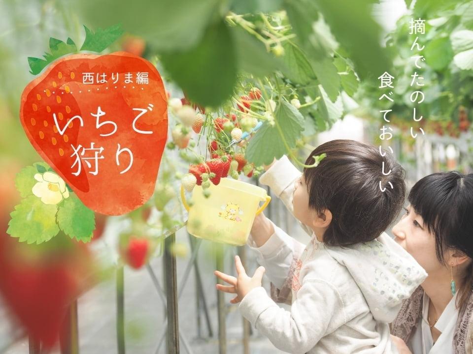 【兵庫県】西はりま人気のいちご狩りスポット!2018年地域別まとめ