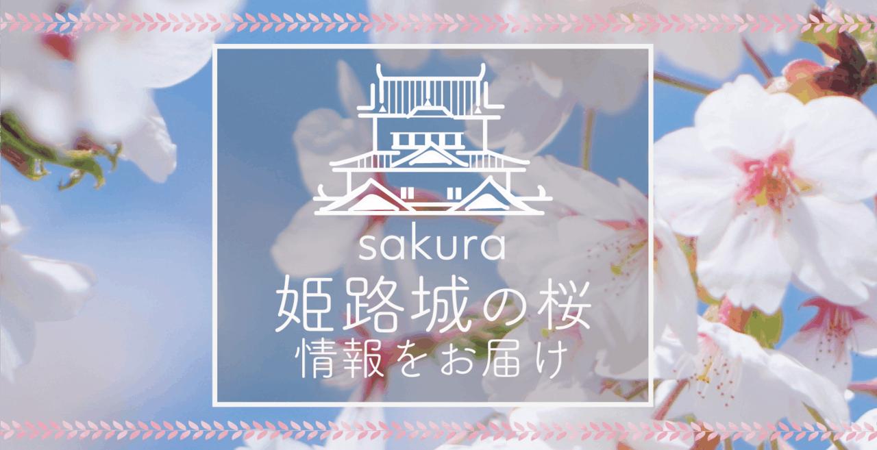 【2018年】姫路城の桜開花実況をお届け!穴場のお花見スポットも◎毎週更新