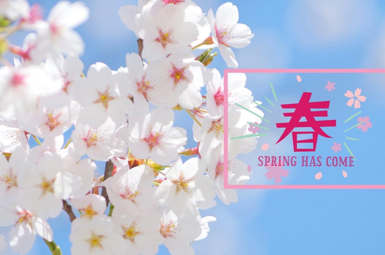 【最新情報をお届け】さくら開花予想!姫路城の桜はいつ満開?ライトアップや駐車場情報まとめ2018