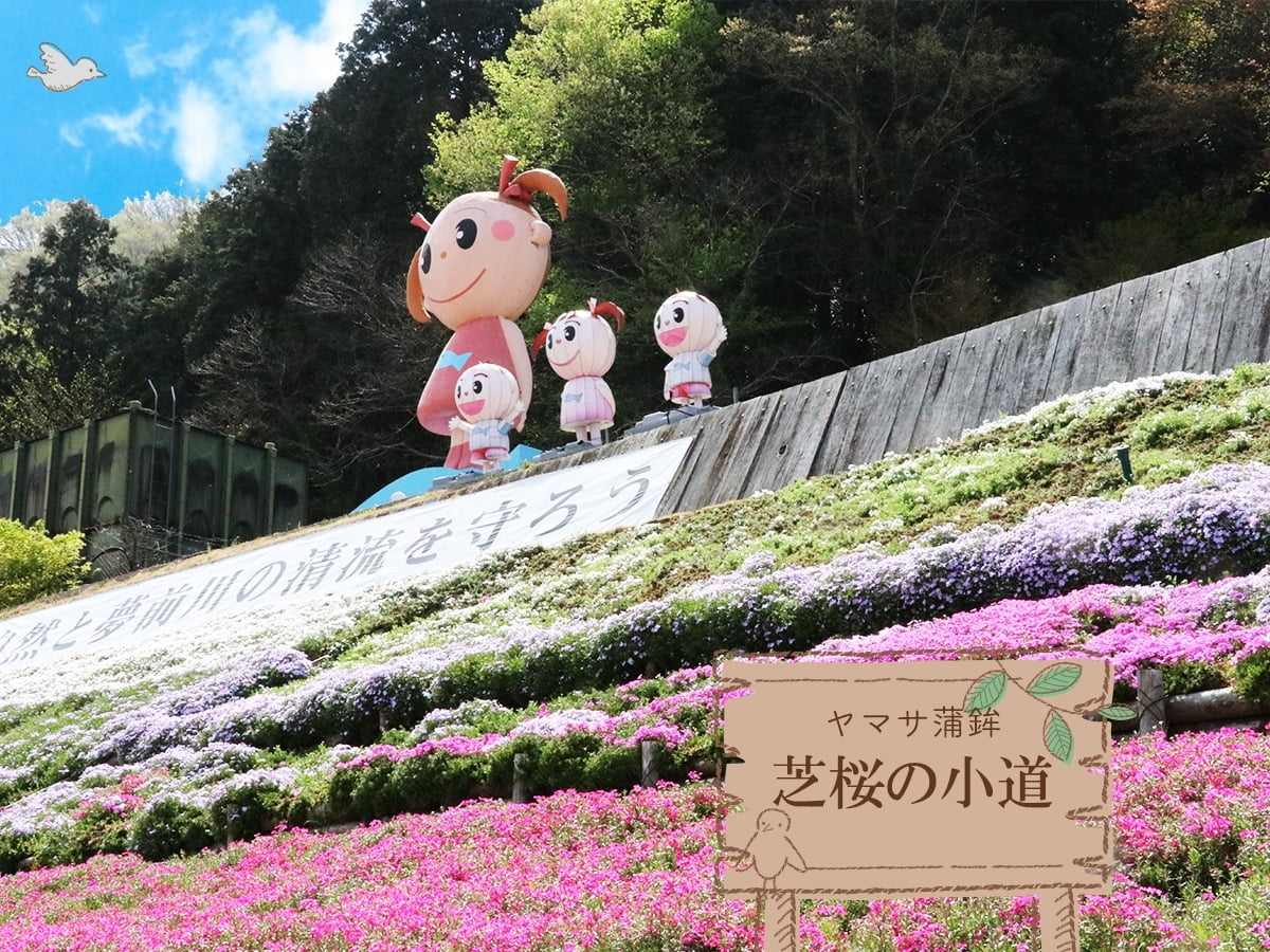 癒しの絶景花トリップ姫路<br>ヤマサ蒲鉾「芝桜の小道」