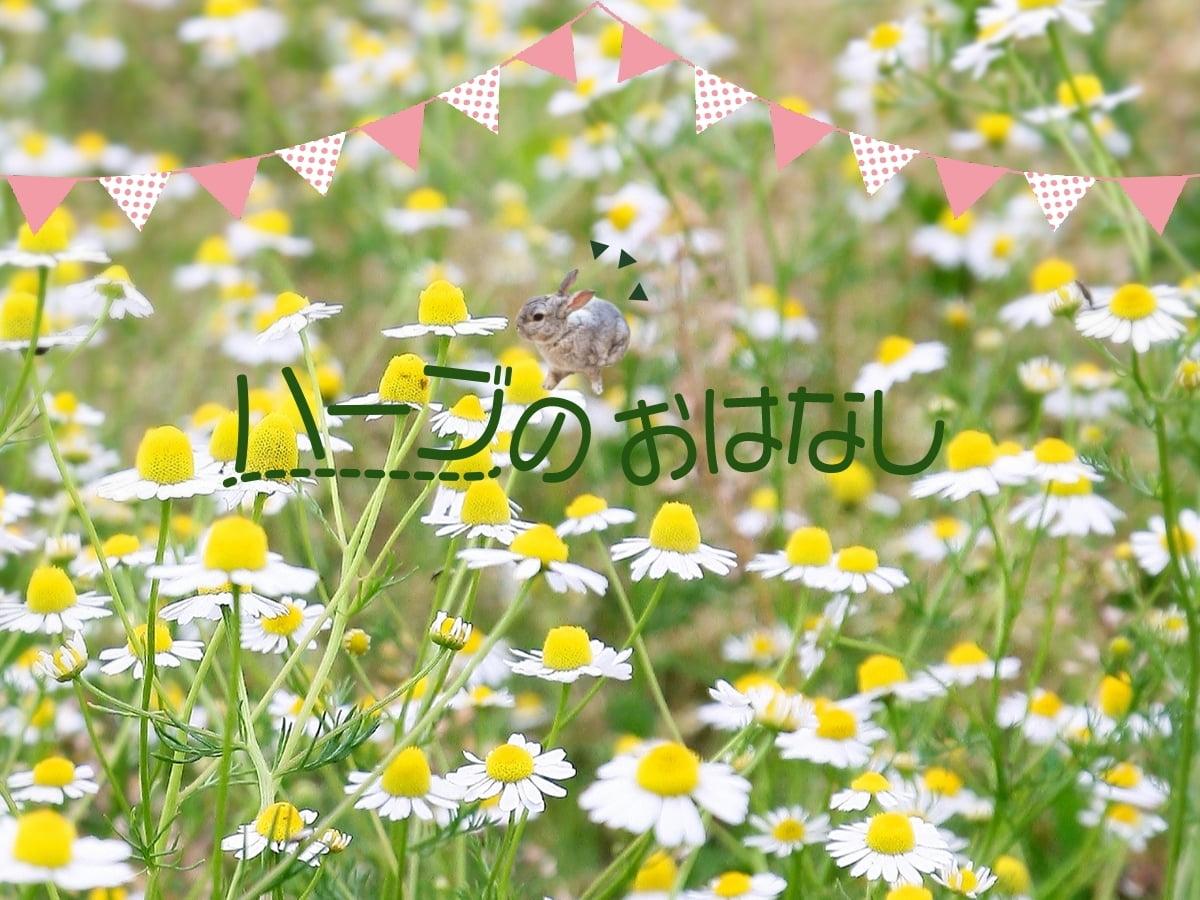 【幸せをはこぶ魔法のハーブ】香寺ハーブ・ガーデン福岡讓一さんのおはなし
