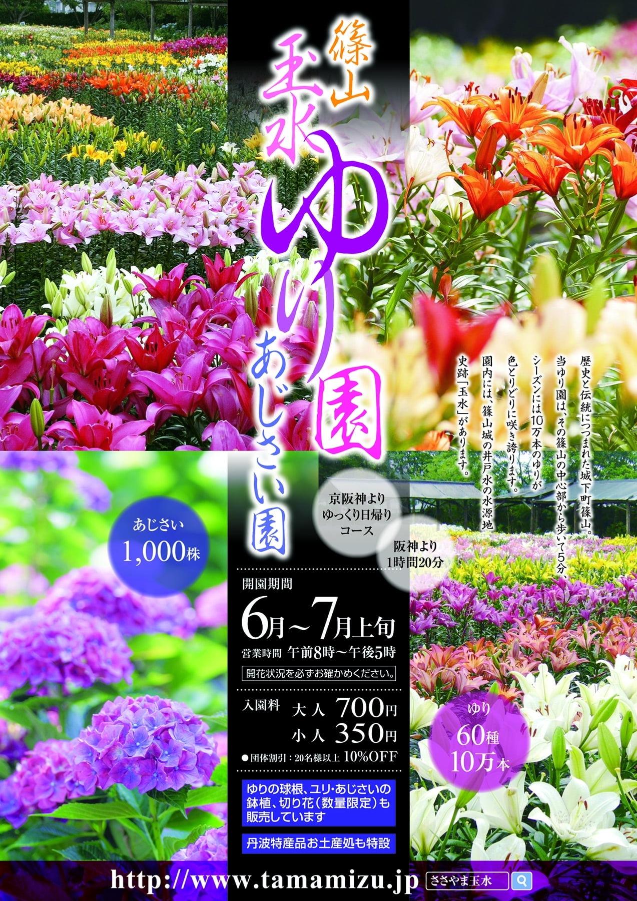 絶景!癒しのお花トリップ♡玉水篠山ゆり園・あじさい園