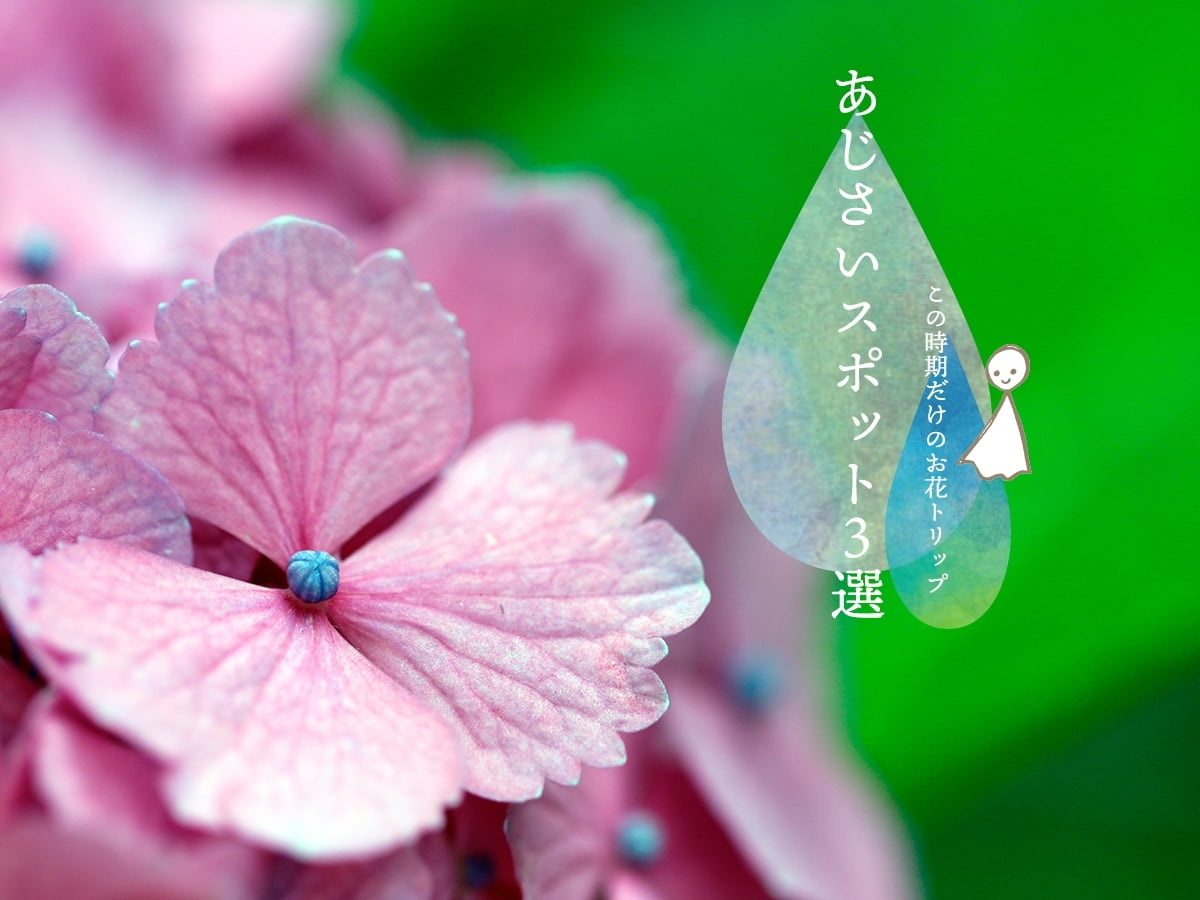 絶景!癒しのお花トリップ♡あじさいスポット3選