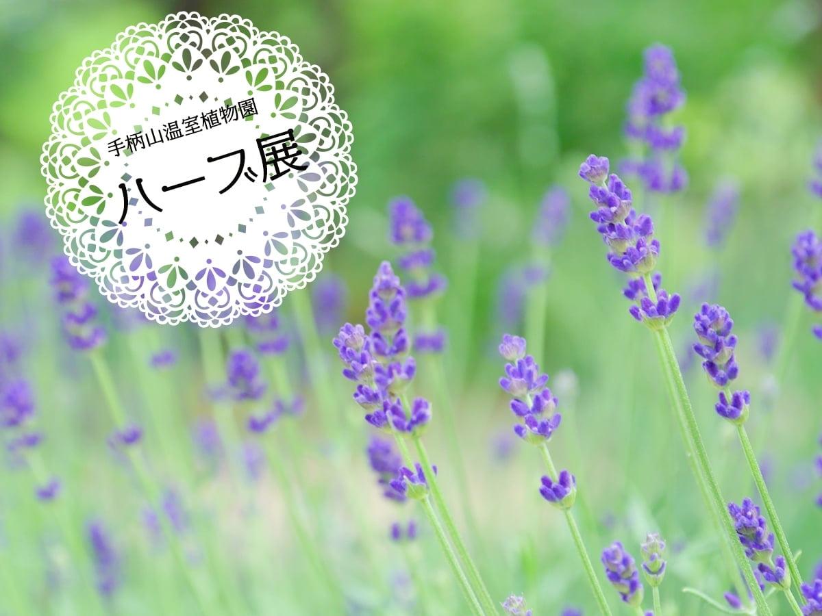 【ハーブ展】2018年5月12日から27日@姫路市立手柄山温室植物園