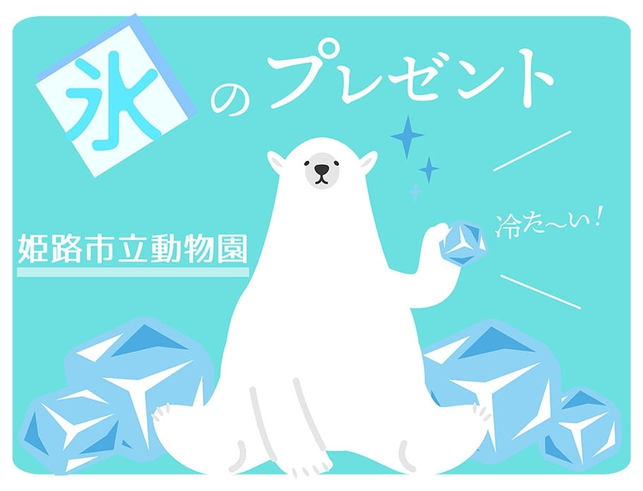 ホッキョクグマに氷のプレゼント【姫路市立動物園】2018年7月23日