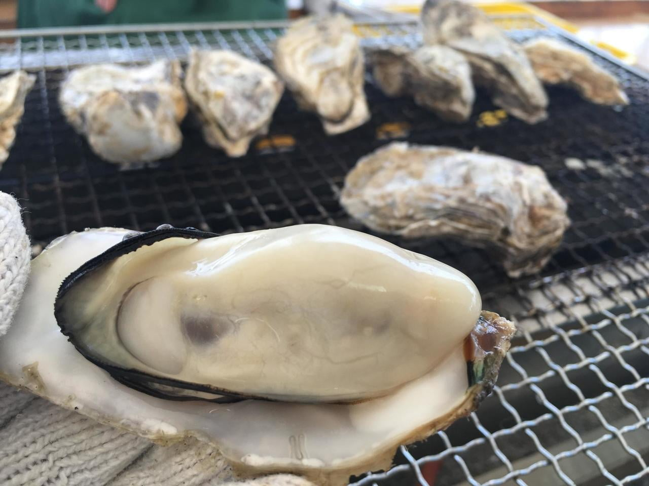 【2019年】牡蠣祭りが熱い!瀬戸内かきまつり情報まとめ!ー室津・赤穂・網干・相生・坊勢ー