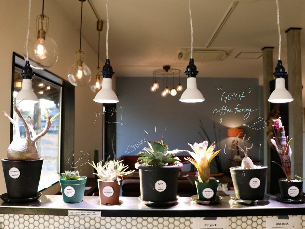 【佐用】観葉植物と本格コーヒーの癒されカフェGOCCIA coffee factory