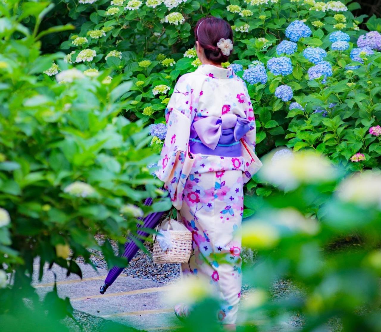 【癒しのお花トリップ】雨に洗われる紫陽花の名所2019兵庫県