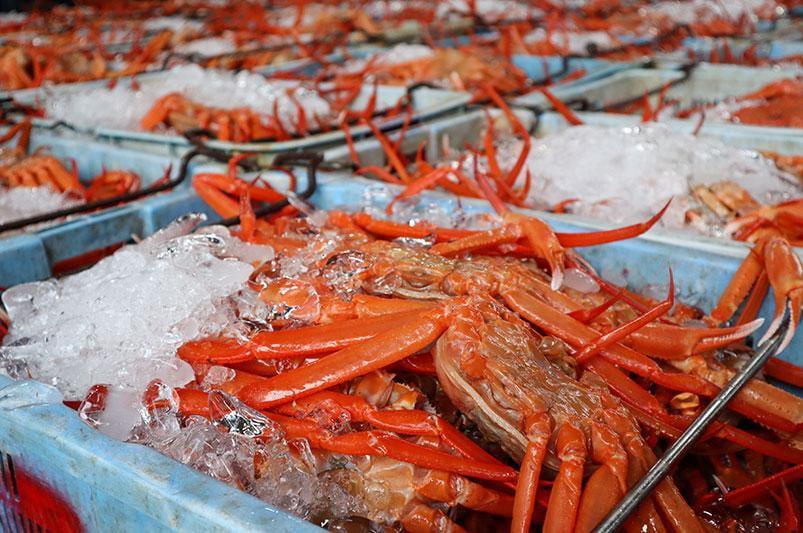 【兵庫】食欲の秋到来!ベニズワイガニ漁解禁・香住ガニの初競りを密着レポート