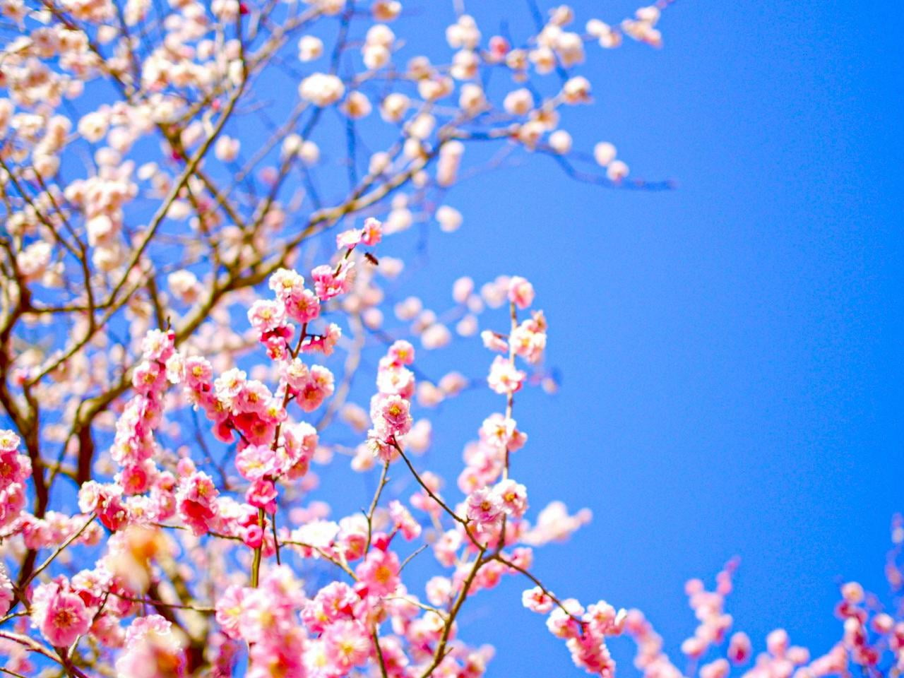 【兵庫・たつの】梅の名所まとめ2021!海を臨む絶景 綾部山梅林/世界の梅公園