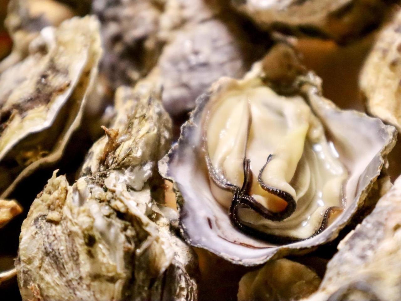 【岡山】牛窓朝市ミニ牡蠣祭り カキ汁の無料配布あり【2020年2月】