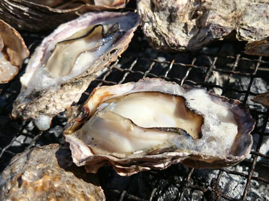 【相生・牡蠣】漁師直営!BBQスタイルで楽しむ「焼がき大豊」