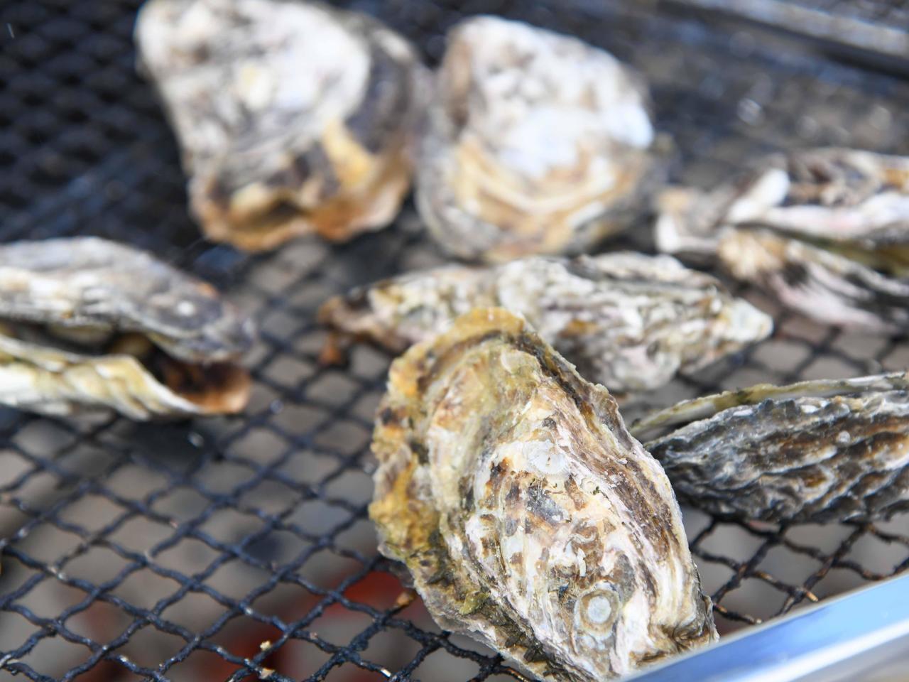 【姫路】網干かき祭りに行ってみた!牡蠣三昧レポ