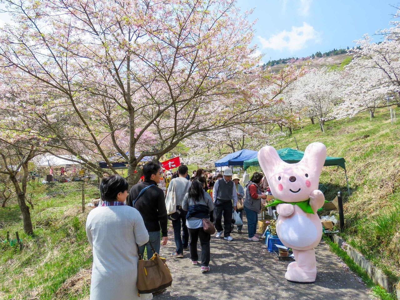 【2020年4月11・12日】かみかわ桜の山「桜華園さくらまつり」【中止】