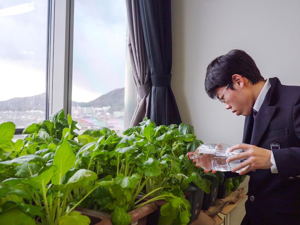 青春グラフィティ!東洋大姫路科学部/プロジェクトTOYO 姫路若菜の栽培研究・缶詰開発