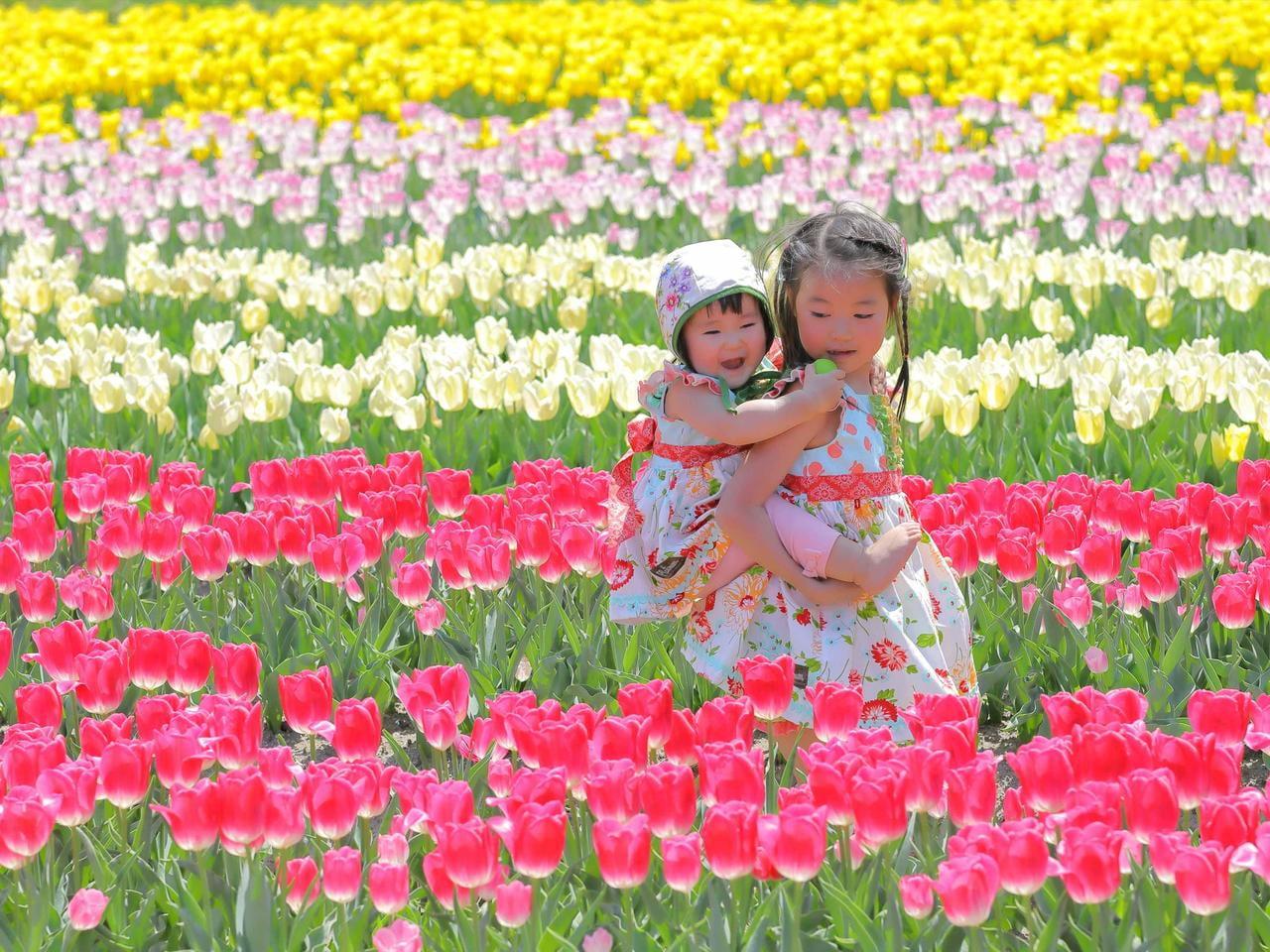 【兵庫】2020たんとうチューリップ 西日本最大級!10万本のチューリップで作るフラワーアート【閉園情報あり】