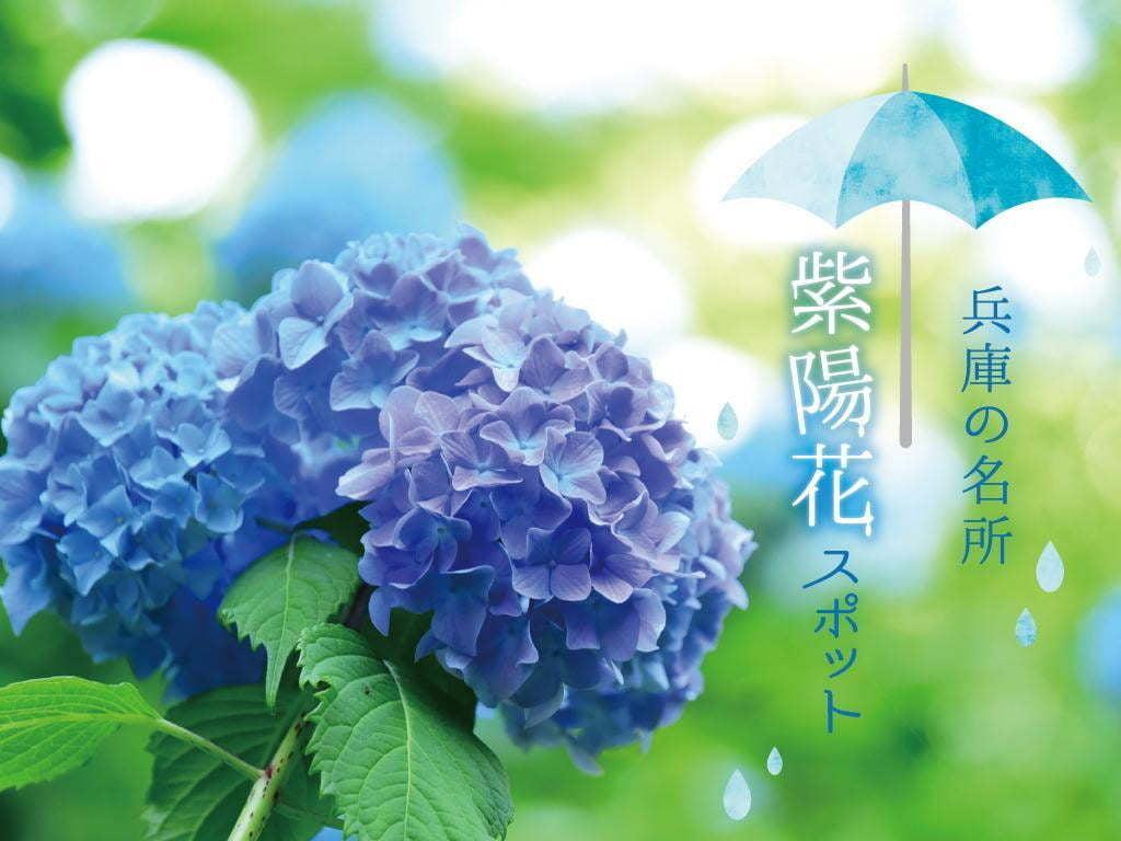 【関西 兵庫】2020アジサイの名所3選 梅雨の時期におすすめ!