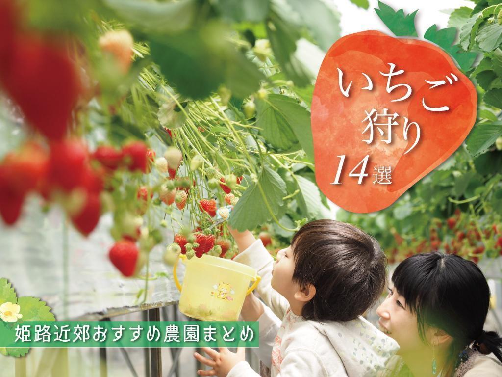 【姫路周辺】人気のいちご狩りスポット14選【2021】食べ放題や料金・予約情報も