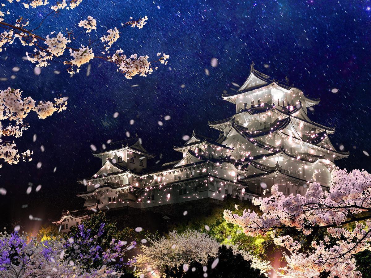 姫路城夜桜会2021「和傘幻想 華灯り」~日本さくらの名所100選~【4月3日~11日】