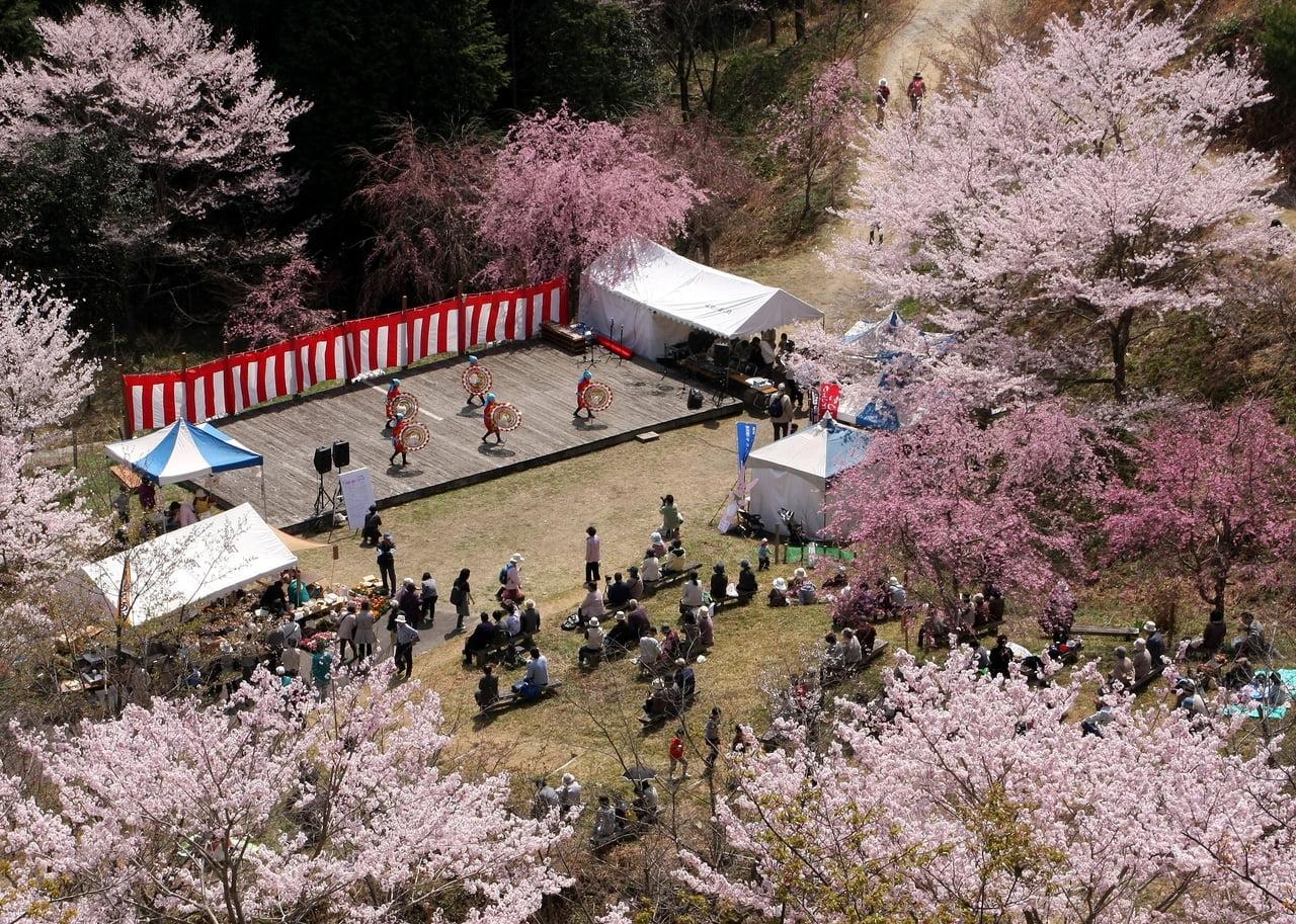 桜まつり華やかに.jpg