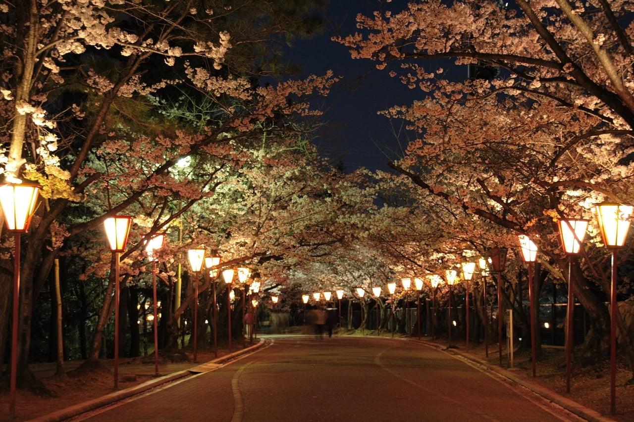 日岡山公園ぼんぼりライトアップ.jpg