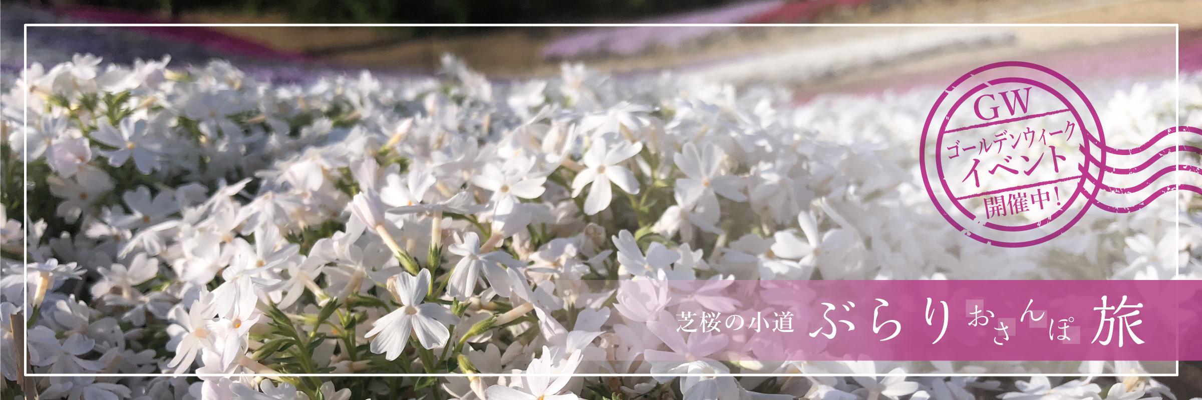 ヤマサ蒲鉾・芝桜の小道~イベントまとめ~
